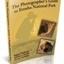 Wildlife Photography eBooks – Capture Photos that will Make You Proud!