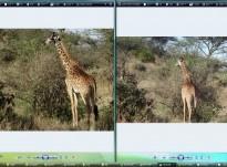 Canon EOS 60D VS Sony DSC-HX200V/DSC-HX300 | DSLR vs Point and Shoot